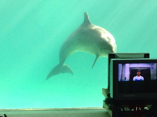 Minami Chita Beach Land: テレビモニターの指示に従うイルカです。