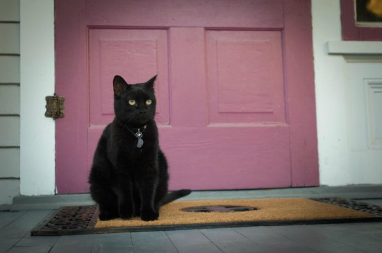 1899 Inn : Minou stands ready on the front porch, but she's a really lousy guard cat.