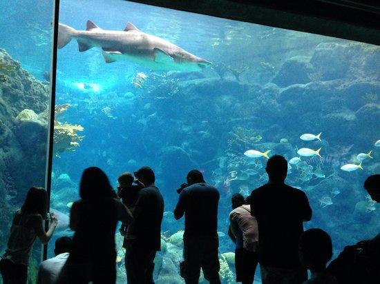 The Florida Aquarium : Shark!!!!