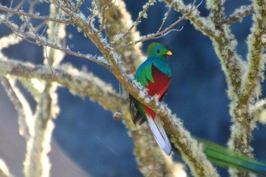 Miriam's Quetzals