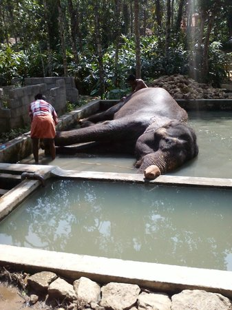 Elephant Junction - Day Tours: Elephant Bath