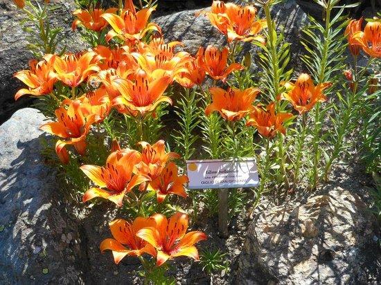 Giardino Botanico Alpino Paradisia : Giardino botanico