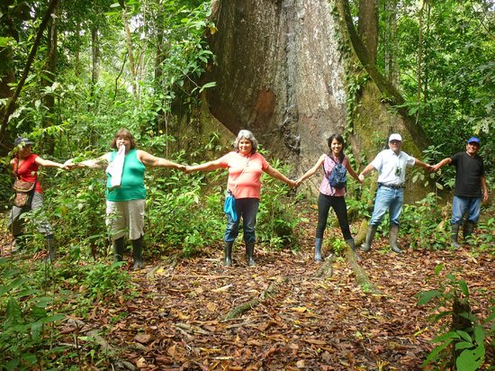Amazon King Lodge: En plena selva bajo un arbol de Huimba