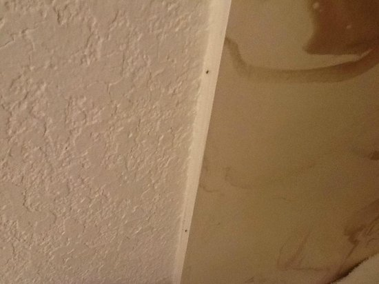 Desert Hot Springs Spa Hotel: Ants in the room!