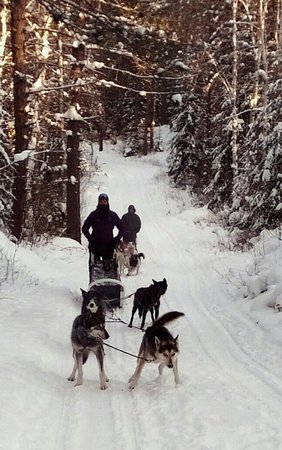 Blue Heron Bed & Breakfast : White Wilderness Dog Sledding