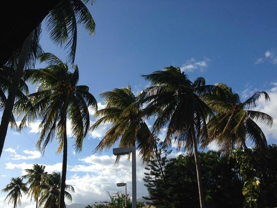 Hotel Longarone: Palm trees from playground