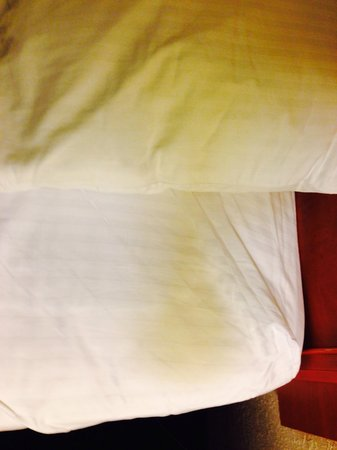 Motel 6 Knoxville: Yellow stained bedding at Knoxville La Quinta