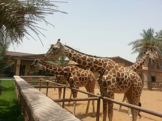 Emirates Park Resort: Zoo view