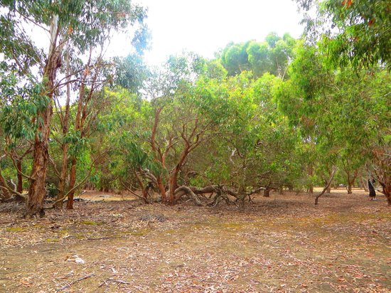 Hanson Bay Wildlife Sanctuary & Koala Walk