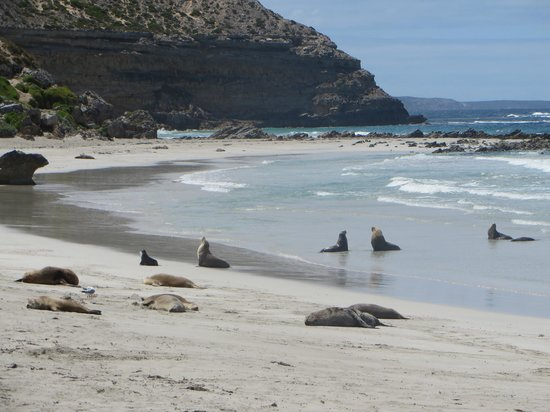 Seal Bay Conservation Park : Seal Bay