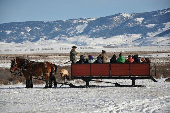 National Elk Refuge: The Sleigh