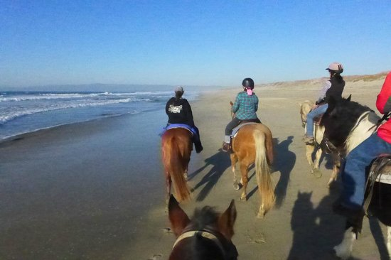 Monterey Bay Equestrian Center: Beach ride aboard Major
