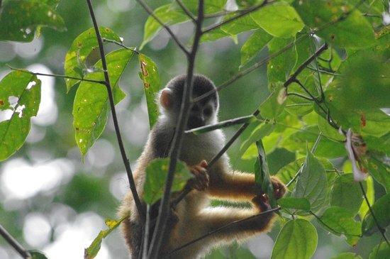 Drake Bay, Costa Rica: squirrel monkey
