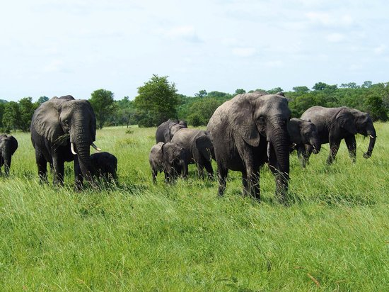 Sabi Sabi Bush Lodge: Elephants up close and personal