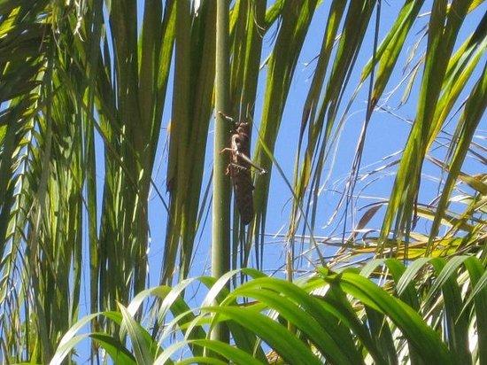 Mundo Milo Eco Lodge: Huge grasshopper by pool