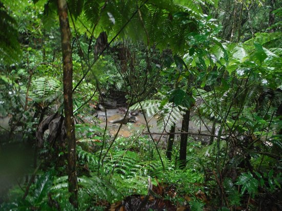 El Yunque Tours: A view  of the river