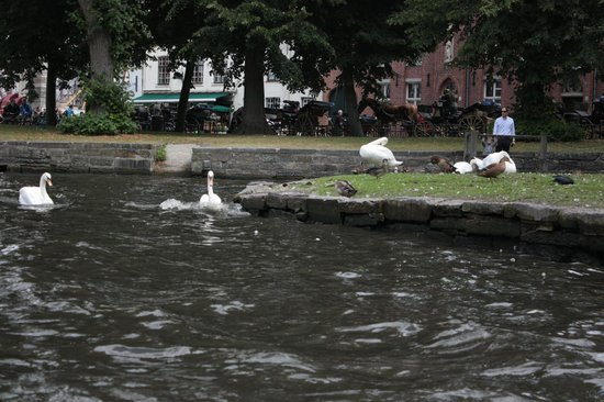 Canal Boat Tours: Bruges canal boat