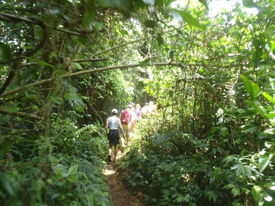Millenium Cave: Jungle track