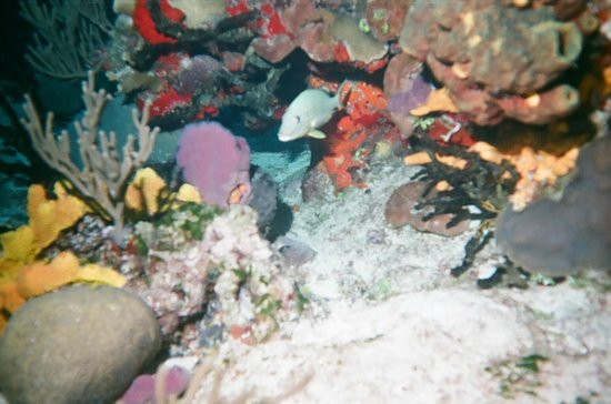 Sand Dollar Sports Diving: Colorful reef close to shore