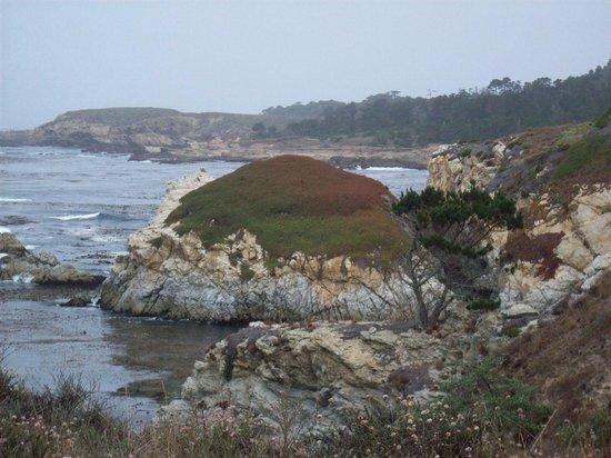 Point Lobos State Reserve : China Cove orange-green vegetation