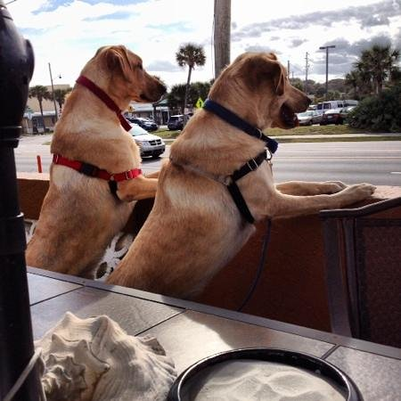 Beachcomber Motel: Pet friendly, my dogs checking out the NSB scene from the patio terrace.