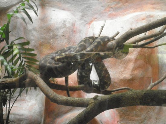 Melaka Butterfly and Reptile Sanctuary: scary...