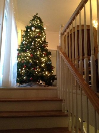 A Highlands House Bed and Breakfast : A delightful Christmas Tree for the season in the living room