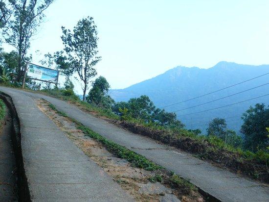Wild Elephant Eco Friendly Resort : A steep climb to the hotel