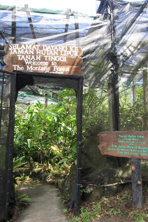 Sabah State Museum: Plants at hill