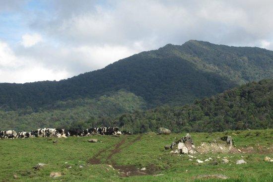 Desa Dairy Farm: the landscape
