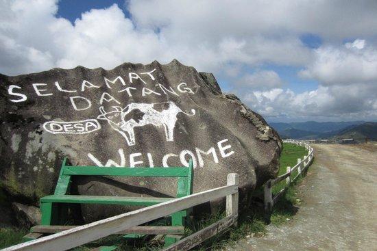 Desa Dairy Farm: Welcome