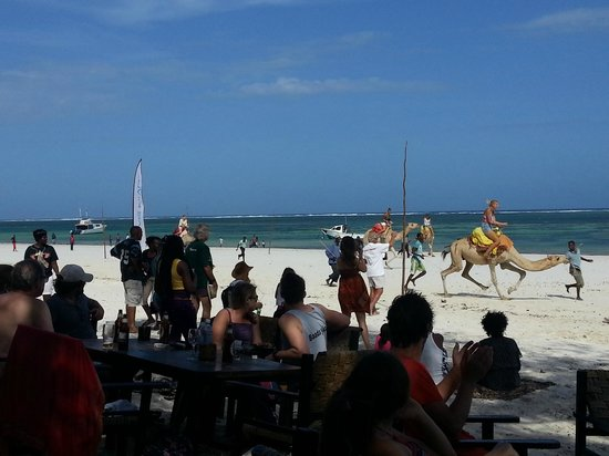 Forty Thieves Beach Bar & Bistro: Camel racing exclusively for young female tourists - very funny