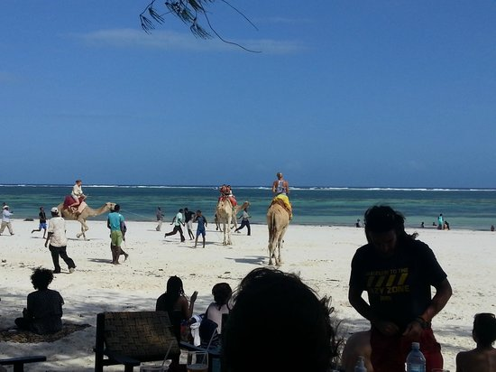 Forty Thieves Beach Bar & Bistro: Camel racing exclusively for youngfemale  tourists - very funny