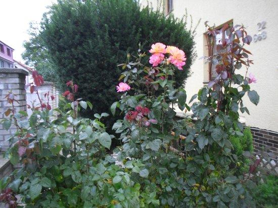 Pension Europa: Цветы на территории отеля
