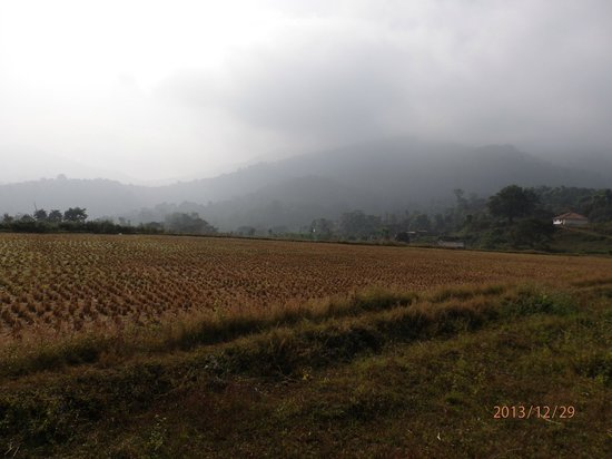 Kings Cottage Home Stay: mountain / paddy field view from cottage