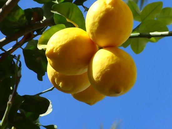 Hotel St. George: lemon garden