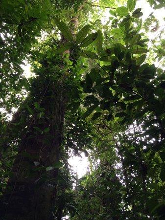 Copa de Arbol Beach and Rainforest Resort : nature trail behind the lodge