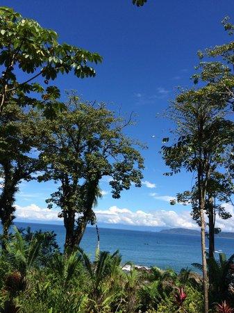 Copa de Arbol Beach and Rainforest Resort : view from the restaurant