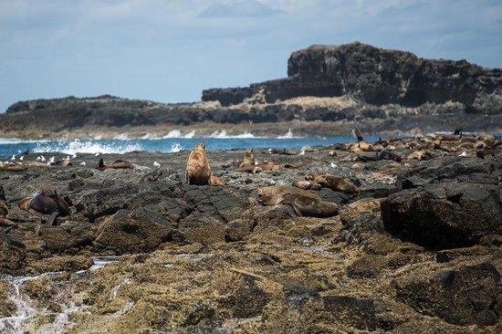 Wildlife Coast Cruises: Seal Rocks