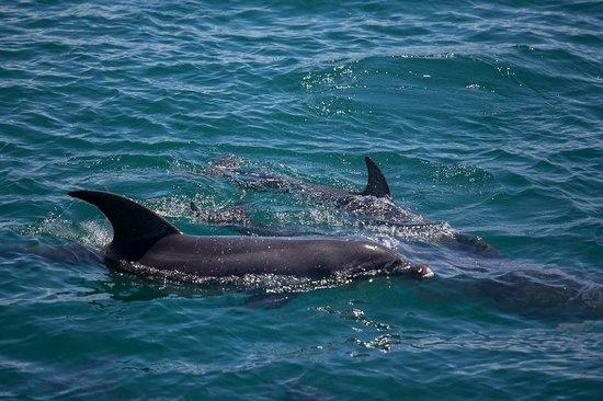 Wildlife Coast Cruises: Dolphins