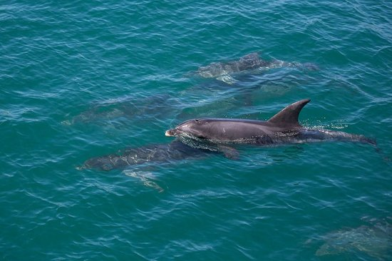 Wildlife Coast Cruises: Dolphins