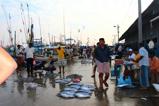 Hambantota Rest House: Wholesale Fish Market