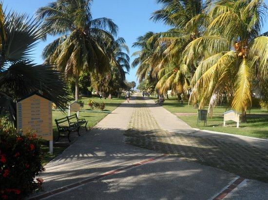 Be Live Experience Varadero: Allée principale vers la plage. Superbe et propre