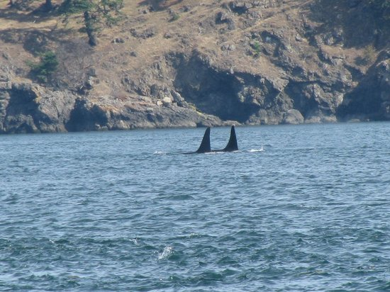 Puget Sound Express - Day Trips: Orcas