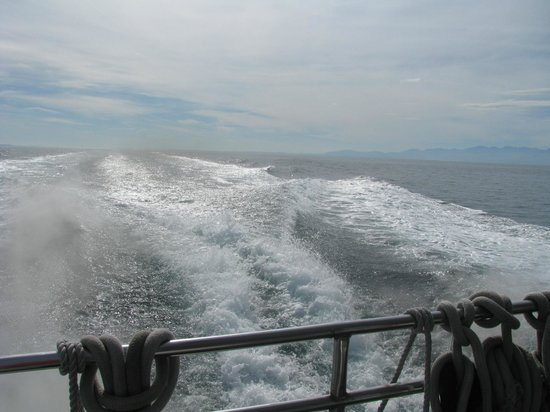 Puget Sound Express - Day Trips: view from back of boat