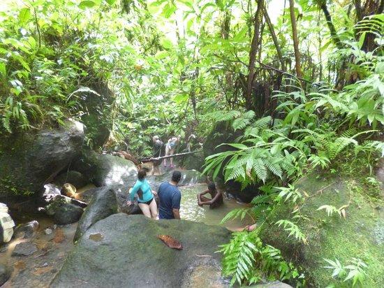 Nature Isle Explorer Day Tours: Hot pools at Trafalgar Falls