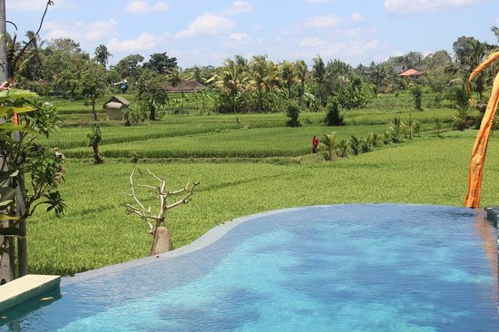 Ubud Padi Villas: swimming pool