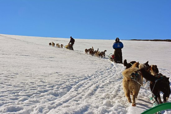 Green Dog Svalbard: Awesome experience!