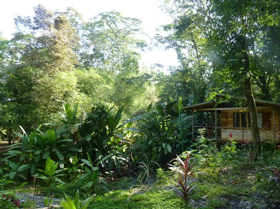 El Tucan Jungle Lodge: vue d'un cabanon