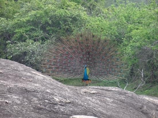 Suduweli - Beauties of Nature: Yala